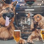 Dogfriendlypubshero 150x150, Greater London Properties