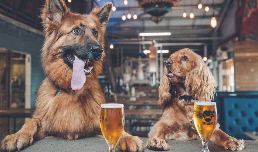 Dogfriendlypubshero 850x500, Greater London Properties
